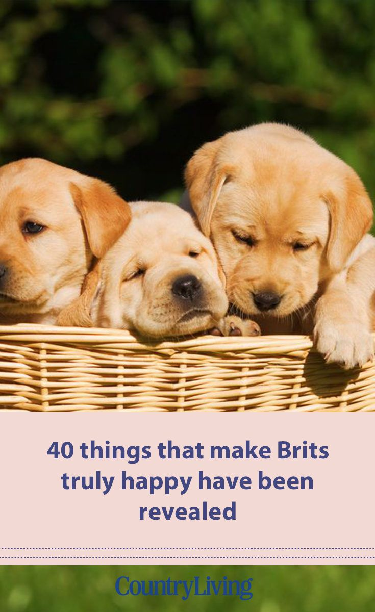 The 40 things that make Brits truly happy have been