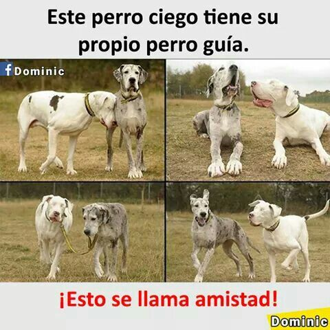 Aveces Los Humanos Tendriamos Que Aprender De Los Animales Perros Frases Mascotas Perros
