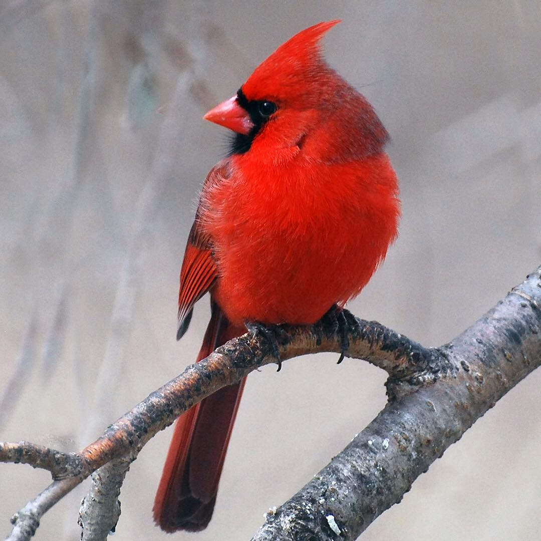 the great backyard bird count starts today it u0027s not too late to