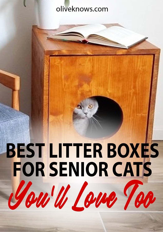 5 Best Litter Boxes For Senior Cats 2019 Guide Tips For Cat Lovers Best Litter Box Litter Box Cat Care Tips