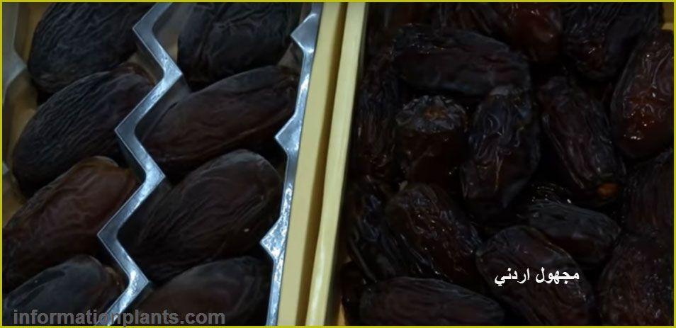 تمر المجهول الاردني قسم التمور مع الصور قسم التمور معلومان عامه معلوماتية نبات حيوان اسماك فوائد Eggplant Vegetables Tmr