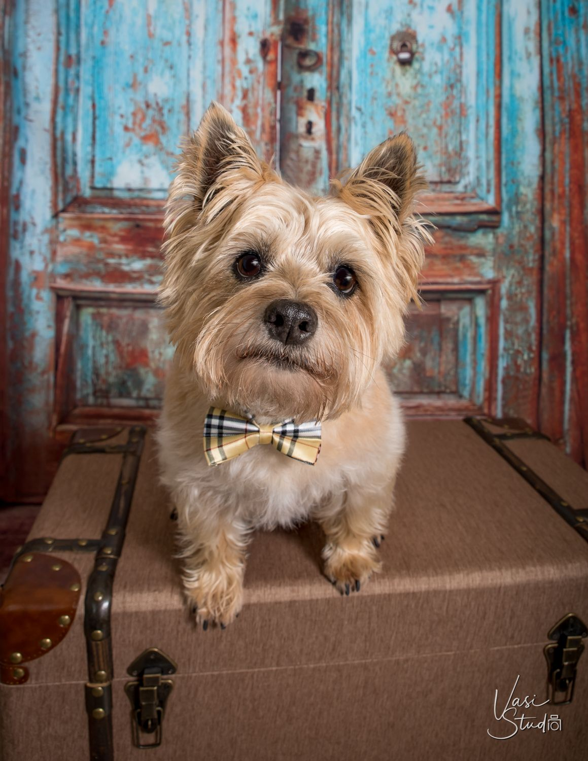 Do you want a professional portrait of your pets? A photo