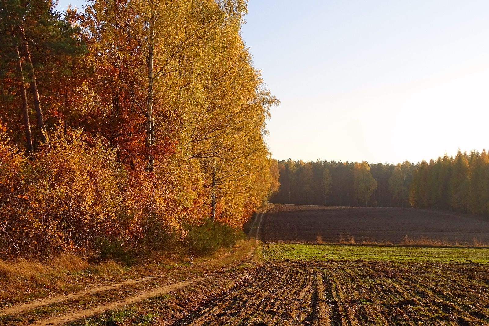 autumn in the forest - Wągry, Poland