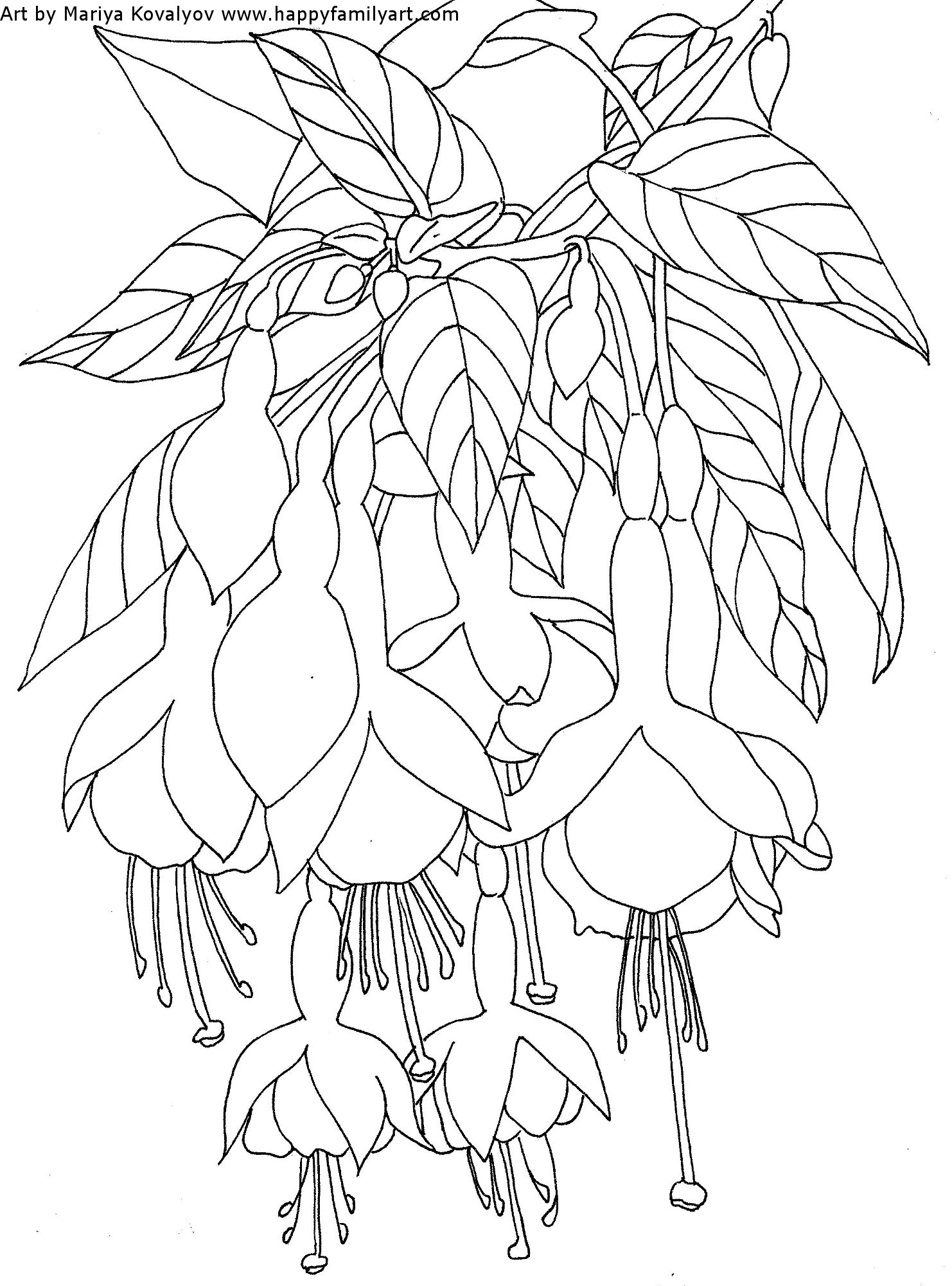 Flower Coloring Pages Fuchsia Water