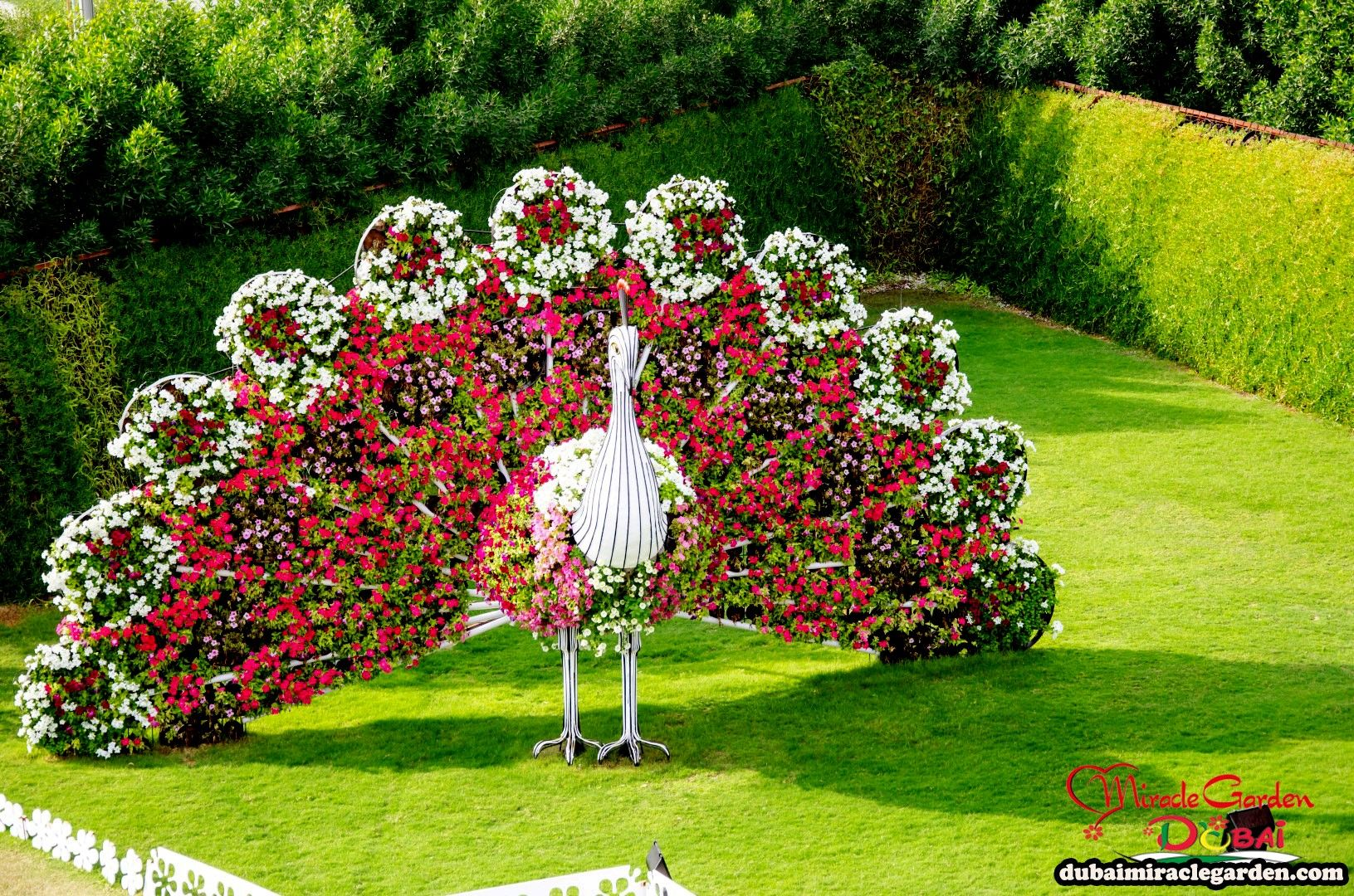 Dubai miracle garden the worlds biggest natural flower