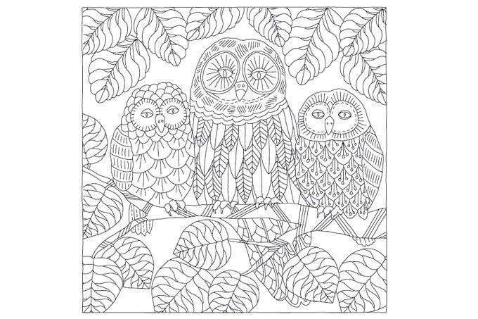 Pin Von Barbara Auf Coloring Owl Ausmalbilder Muster Malvorlagen Ausmalen