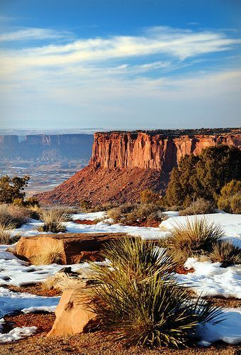 Photo of canyonlands yucca blue sky