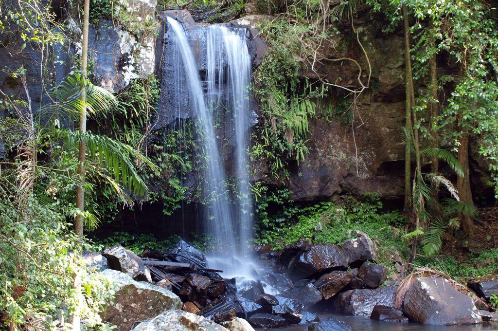 Rainforest Waterfall At Mt Tamborine