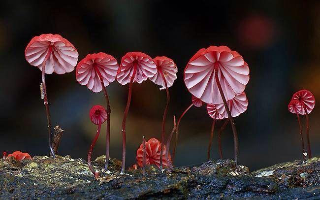 Beautiful and strange fungi.