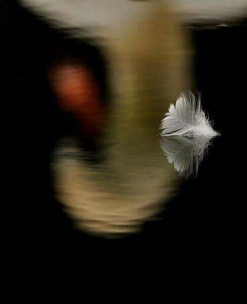 الإنسان الذي يحمل ذنبا ليس بإمكانه النمو لذا أعلمك أن تغفر اولاً لنفسك لتفتح النافذة التي تدخل منها رياح السلام.  #اوشو
