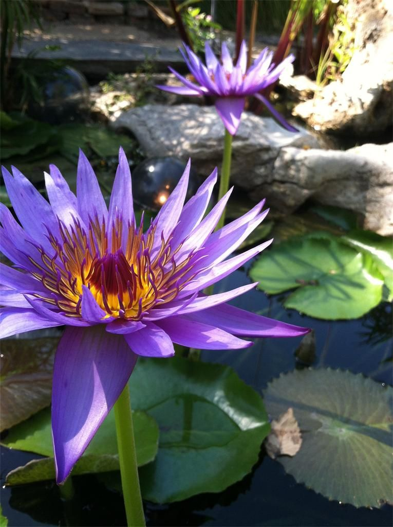 Today's shot of the day comes from Ryan Cheney who took this photo of a lilly pad flower on west Maple.