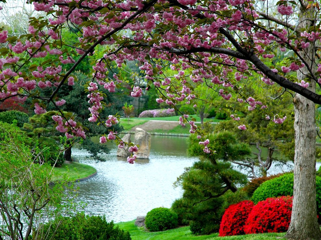 Spring is the best time to see cherry blossom and other for Flowers for japanese gardens