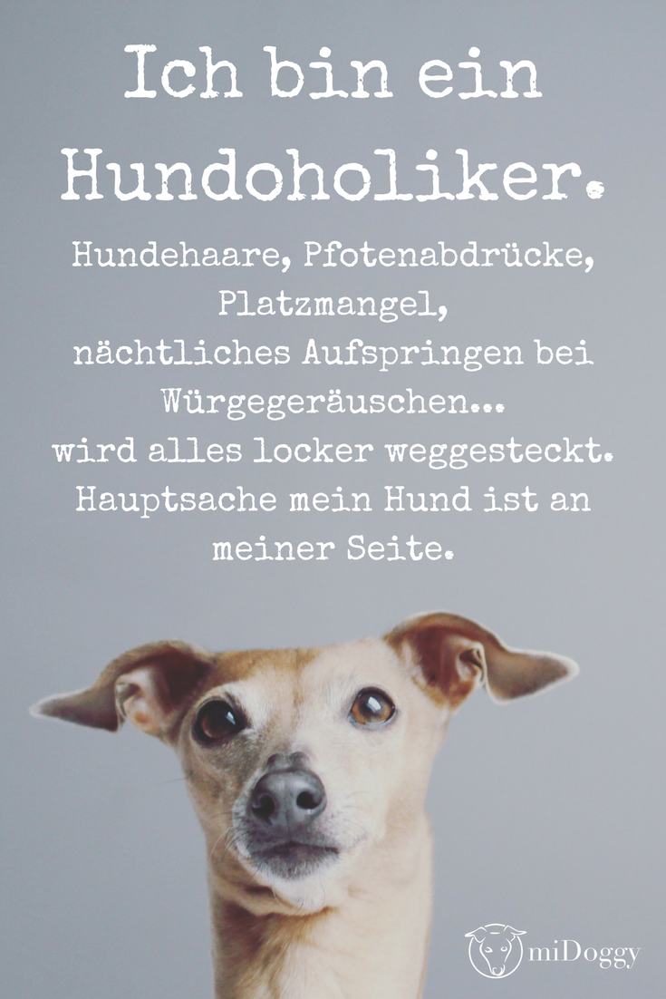 Hund Tipps Informationen Bilder Hundesprüche