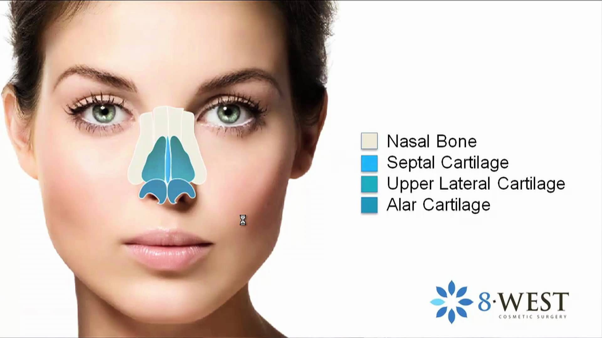 Nasal Anatomy The Nose Anatomy, Form & Function for
