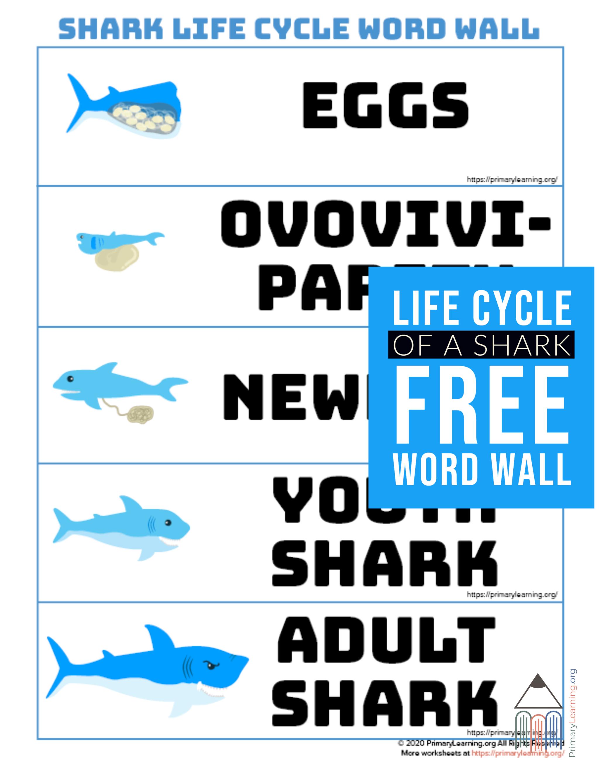 Shark Life Cycle Word Wall In
