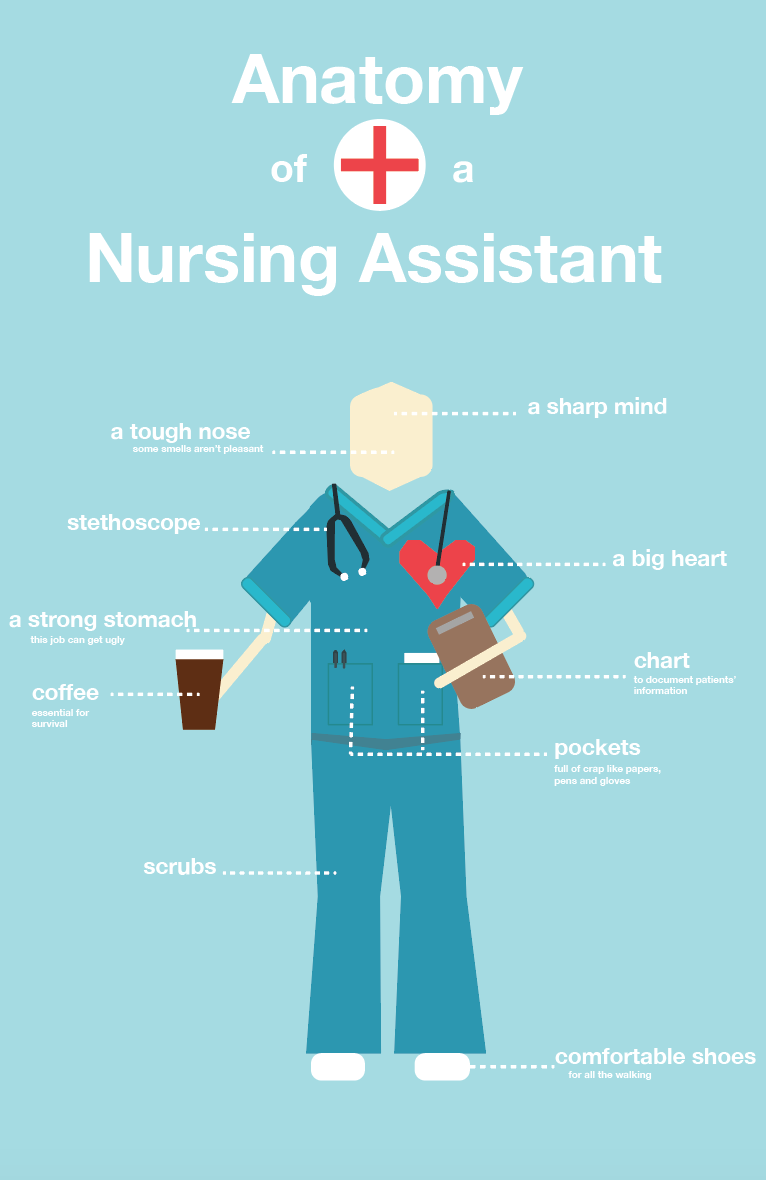 Anatomy Of A Nursing Assistant Infographic Nursing Assistant Nursing Assistant Training Certified Medical Assistant