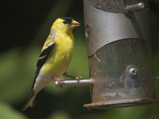 Back Yard Birds of Western North Carolina | Birds ...