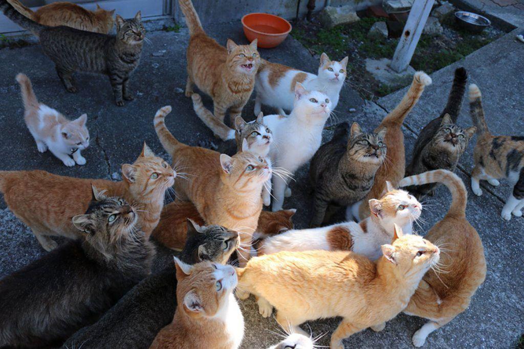 A ilha dos gatos no Japão pediu comida a internet e recebeu mais do que pode armazenar 02