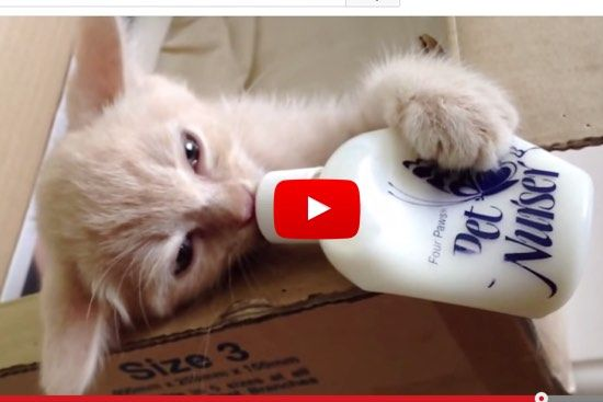 Cute Kitten Flapping Ears Drinking Milk Bottle On His Own Love Meow Kittens Cutest Funny Cat Videos Pretty Cats