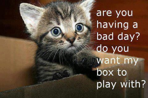 YES! I WANNA PLAY IN THE BOX!! as long as you r there little cute fluffy thing