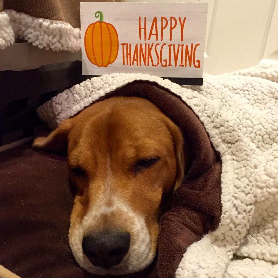 Wake Me Up When The Thanksgivingfeast Is Ready To Eat