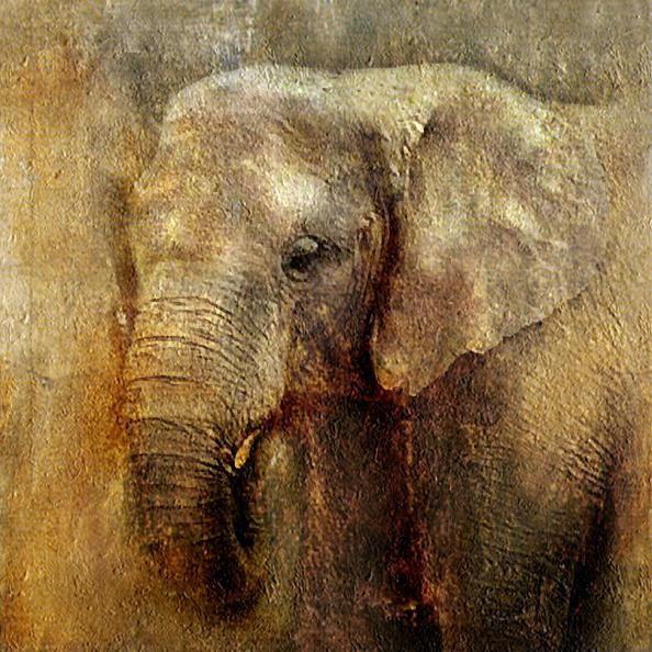 Olifant kunst op pinterest ganesha wilde dieren kunst for Schilderij olifant