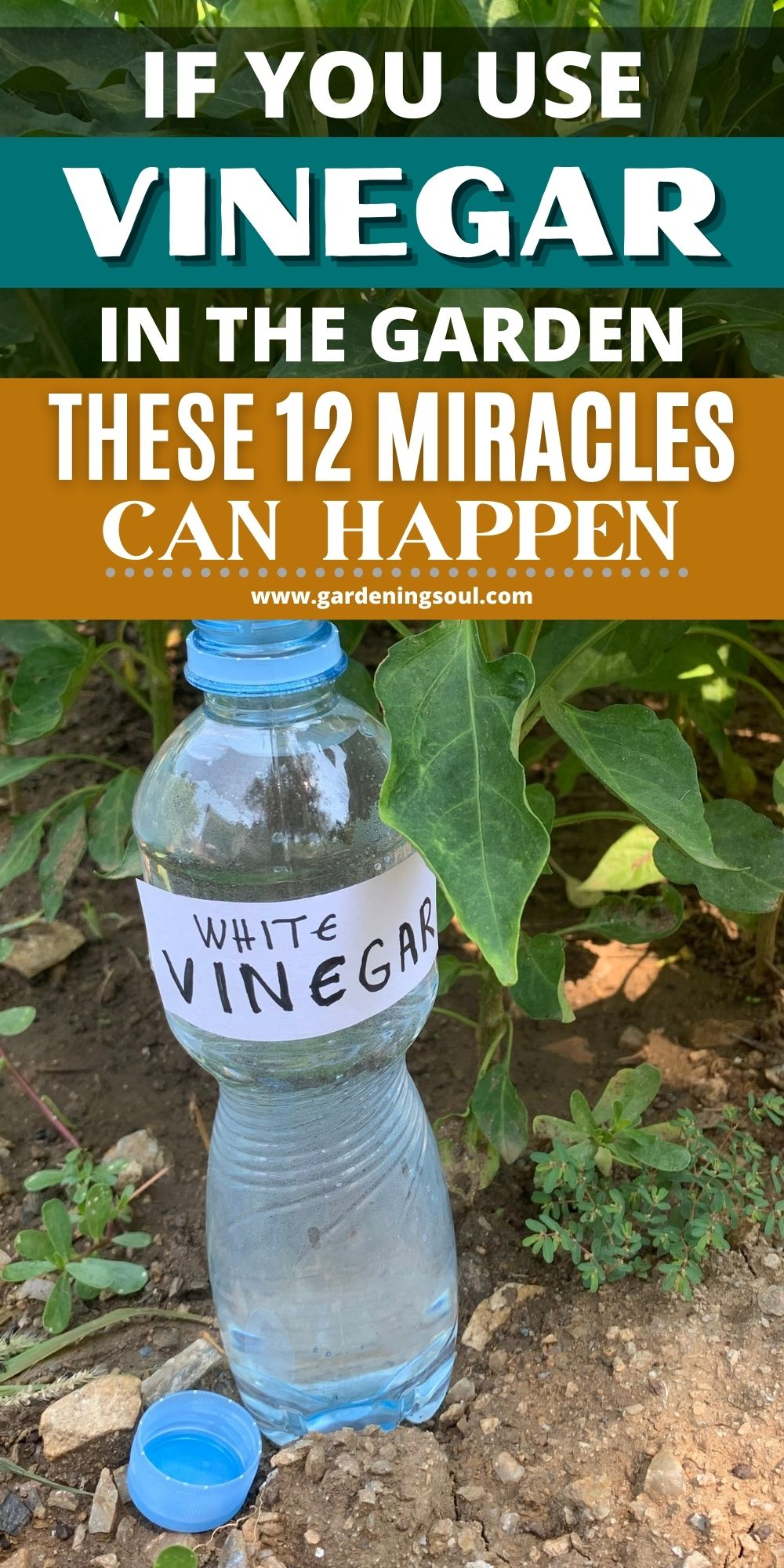 If You Use Vinegar in the Garden These 12 Miracles