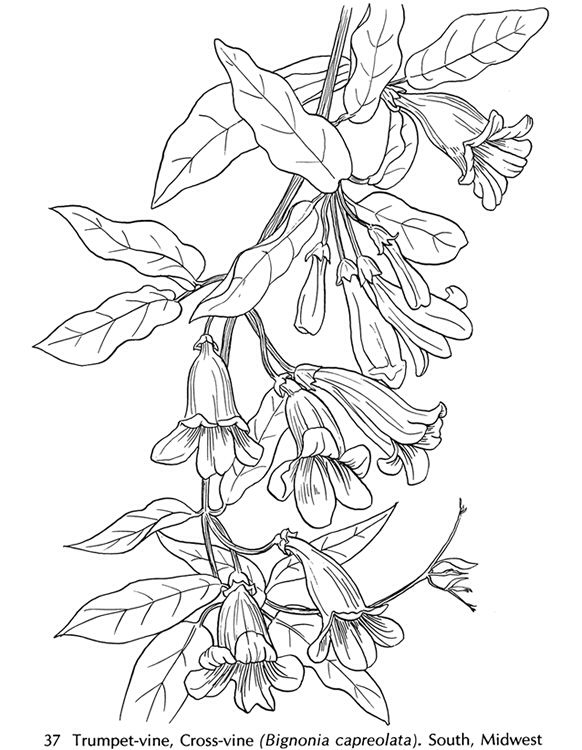 Floral 1 Coloring Pages Flower Drawing Flower Coloring Pages