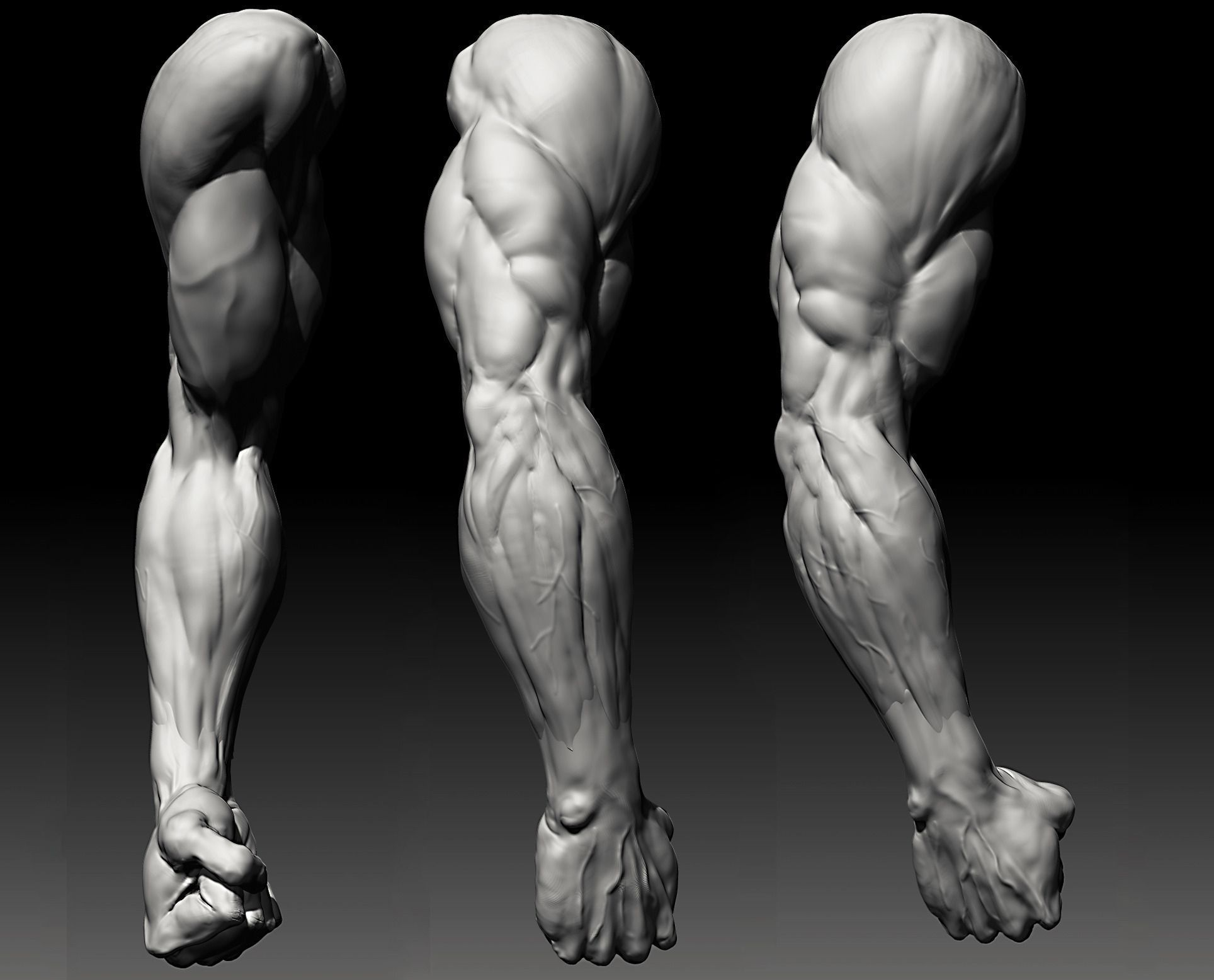 Forearm Muscles In Hd In 3D 74 Best Images About Muscle Anatomy On ...