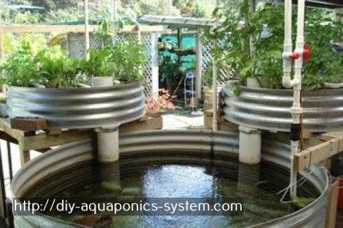hydroponic greenhouse with fish - hydroponic tower diy ...