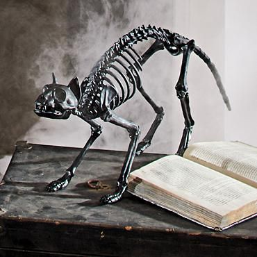 shop for halloween skeletons and skeleton decorations from grandin road halloween haven these halloween skeleton props will complete your spooky display - Skeleton Decorations