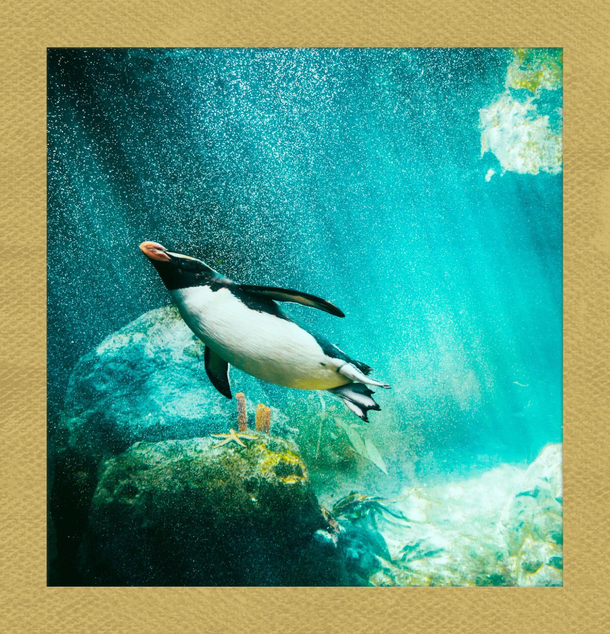 Flying Underwater Follow Polaroidfx Polaroid Frame