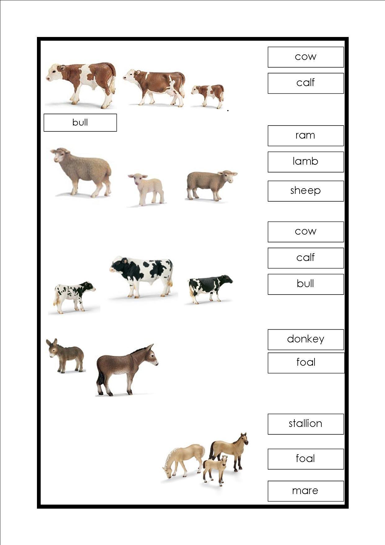 Montessori The Farm Labeling Nouns