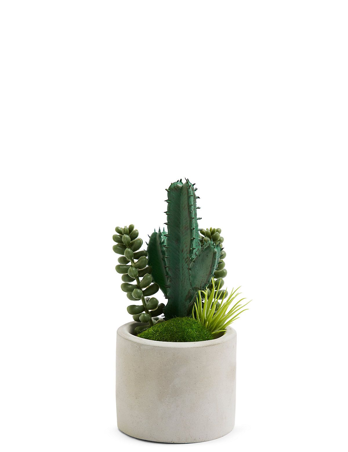 Pagectrl Pagedata Name Small Cactus Cactus P*T Cactus 400 x 300