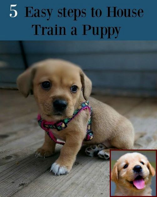1 Have Dog Behavior Problems Learn About House Training A Puppy French Bulldog And Clicker Training Dogs Pros C Puppy Training House Training Puppies Puppies