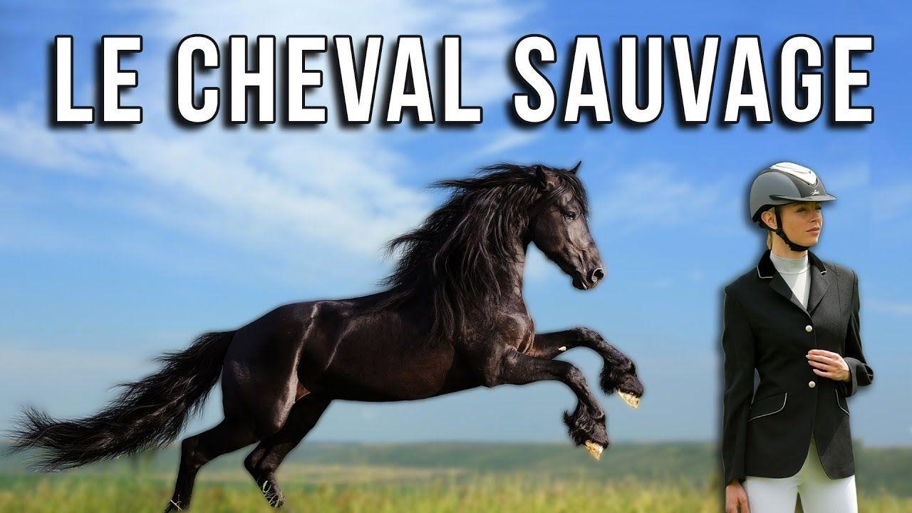 Le Cheval Sauvage Film Complet En Francais Hd 2019 Sauvage Film Chevaux Sauvages Cheval