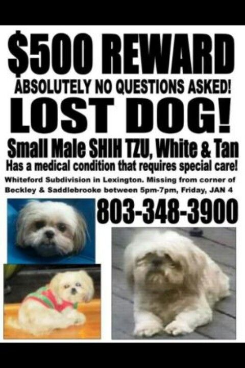 From craigslist -$500 REWARD, HAVE YOU SEEN OR ADOPTED ME ...
