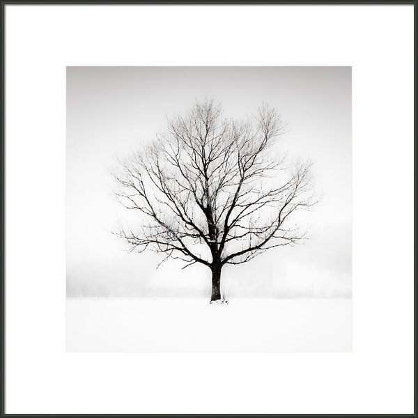 Solitude framed print by lynne douglas