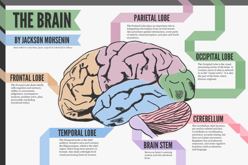 Several Parts Of Your Brain Help You >> Are You Familiar With The Different Parts Of Your Brain Brainiac