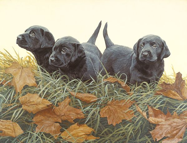 Lab Puppies By John Weiss Published By The Greenwich Workshop Lab Puppies Dog Artwork Labrador Art
