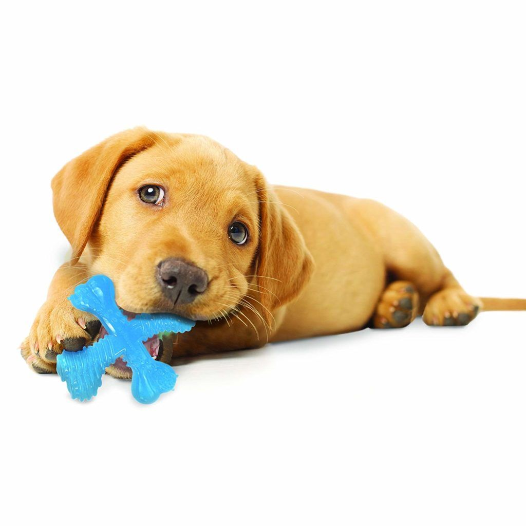 Best Pet Insurance With Images Dog Names Female Dog Names Best Pet Insurance