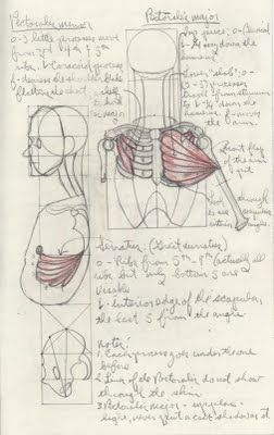lessons on figure drawing with anatomy details