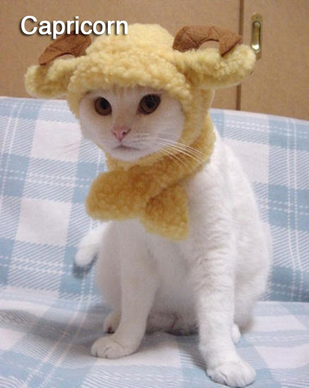 The 12 Cats Of The Zodiac Cute Cats Cute Animals Cute Animal Pictures