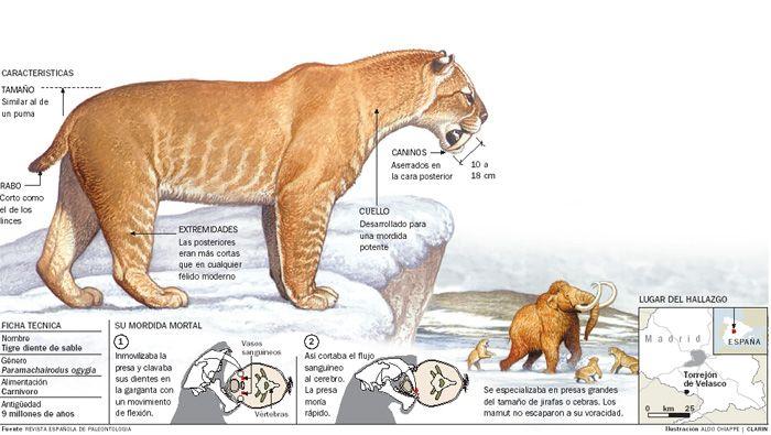 El Tigre Dientes De Sables El Mejor Depredador Tigre Dientes De Sable Dientes De Sable Animales De La Prehistoria