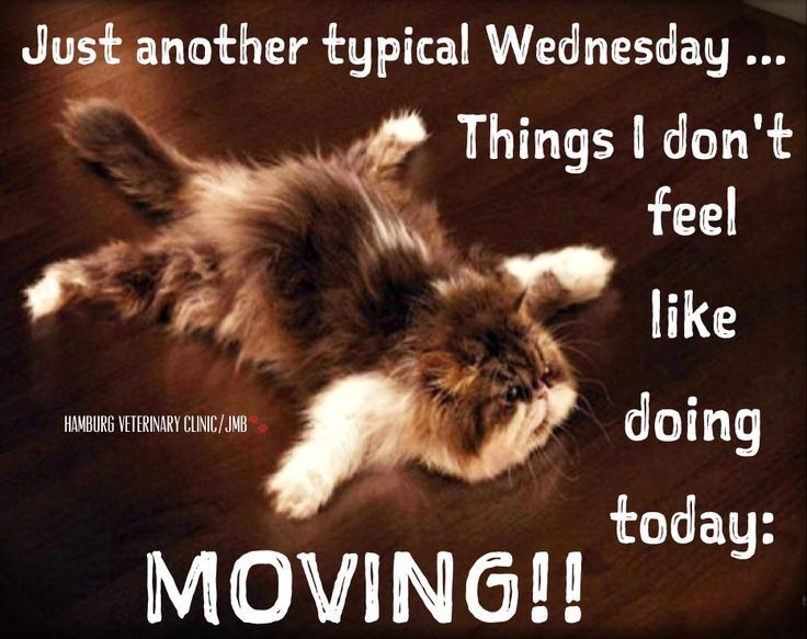 Image result for happy wednesday cat pictures