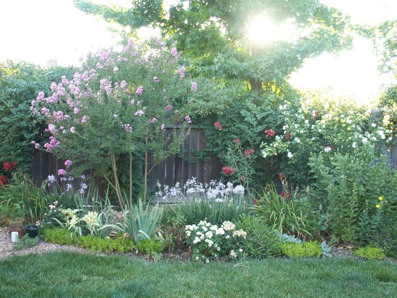 garden ideas disguising an ugly fence