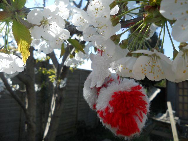 Our cherry tree with Alina's Marteniza