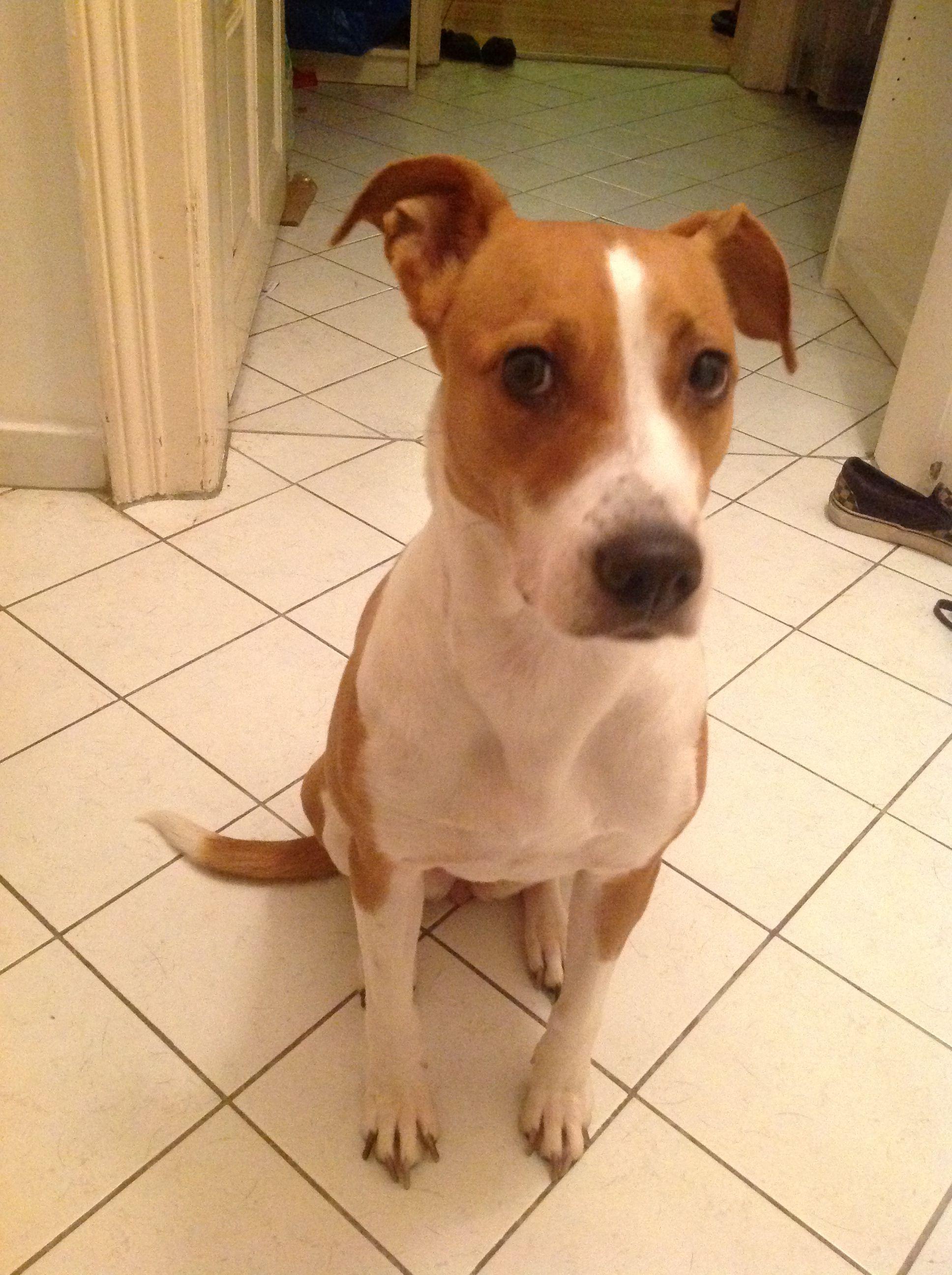 Ella | Hunde, Lustige hunde und Hunde bilder