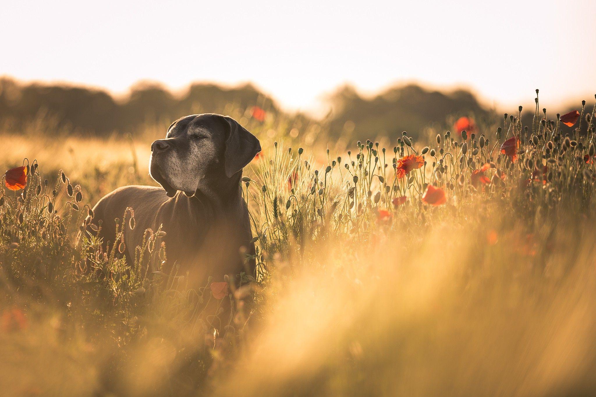 Cannimal CBD Ailment Specific Formulas (With images) Dog