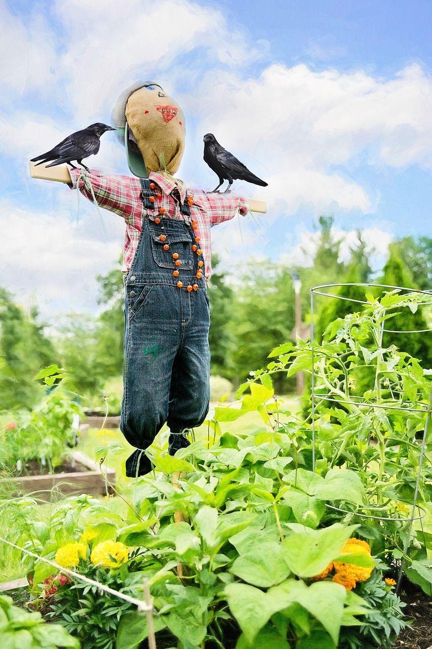 Garden, Scare Crow, Crows, Garden, Bird #garden, #scarecrow, #crows,  #garden, #bird | Crow, Garden design, Bird garden
